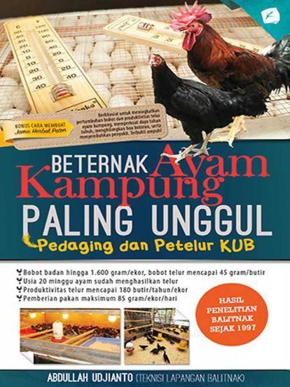 6. Beternak Ayam Kampung Paling Unggul : Pedaging & Petelur KUB